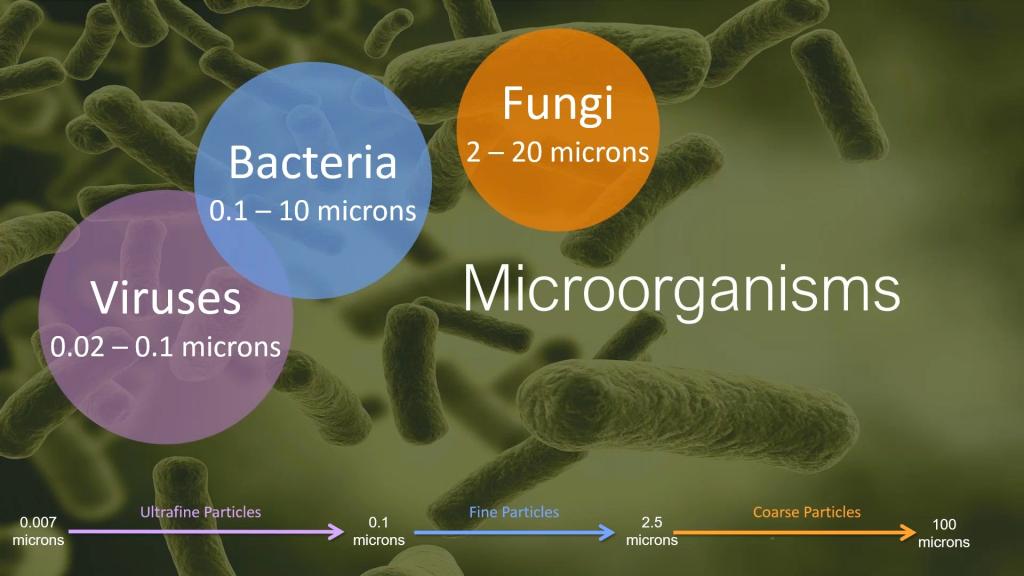 batteri virus funghi